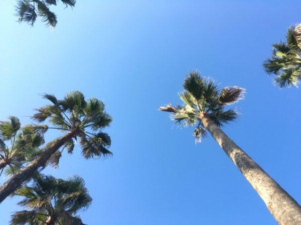 青い空とフェニックス