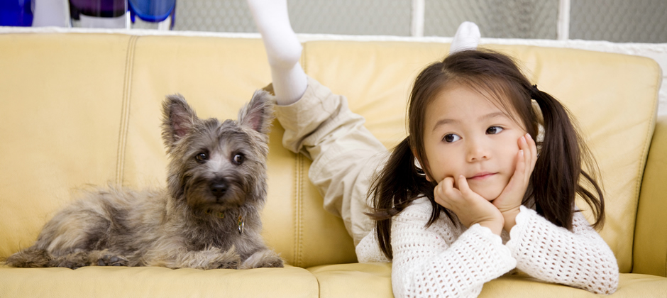 引越しのときは、ペットをストレス無く連れて行ってあげましょう