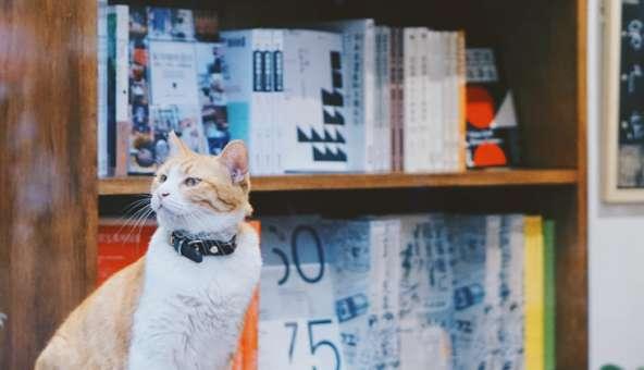 本を整理しておしゃれな本棚に