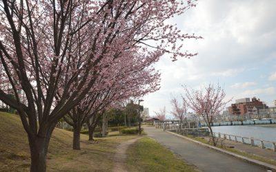 徳島中央公園(徳島市)