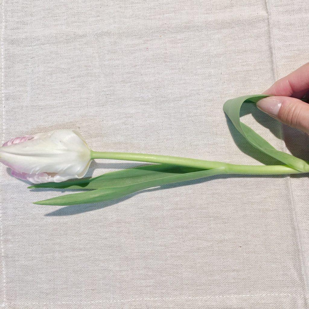 チューリップ葉剥き