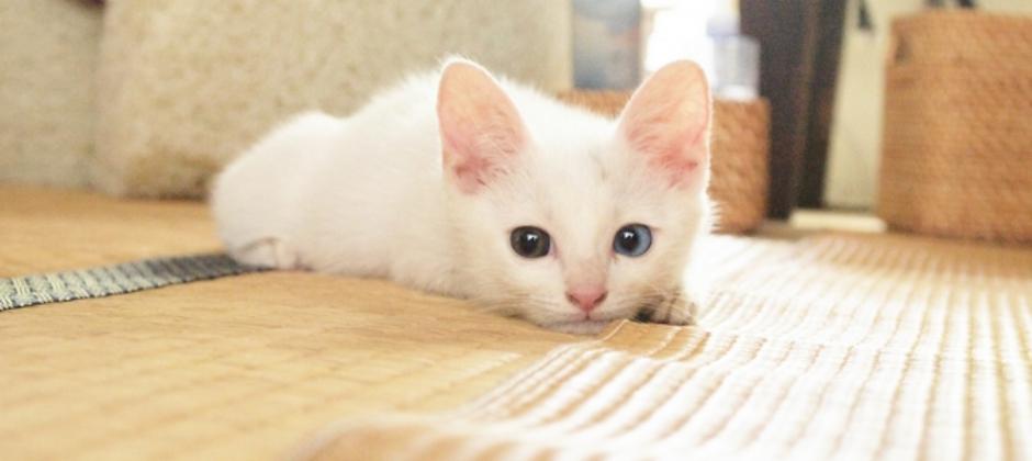 灯油・赤ちゃん・ペットの尿…粉末洗剤や塩・小麦粉をふりかけて掃除機+拭き掃除