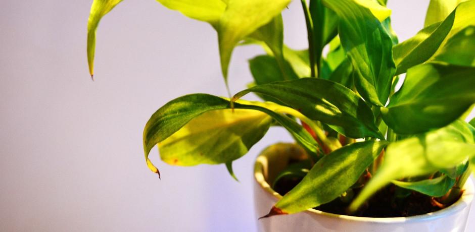 和室では、植物を育てたり、ペットを飼ったりしない