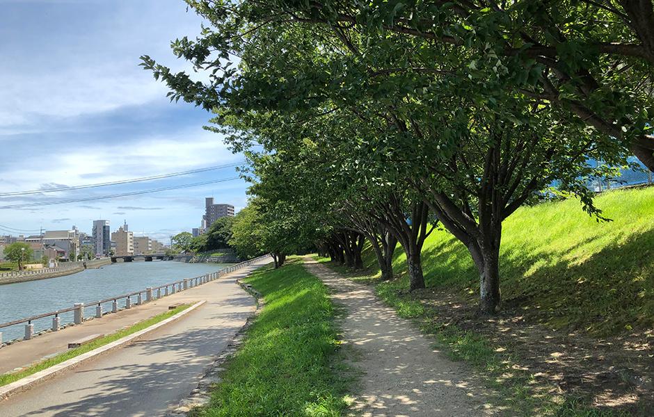 助任川沿いの遊歩道