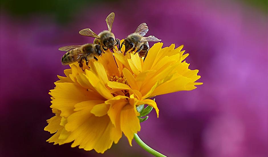 虫が集まりやすい植物は対策を