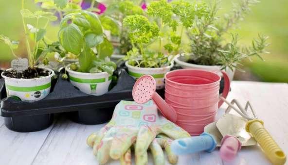 マンション 家庭菜園