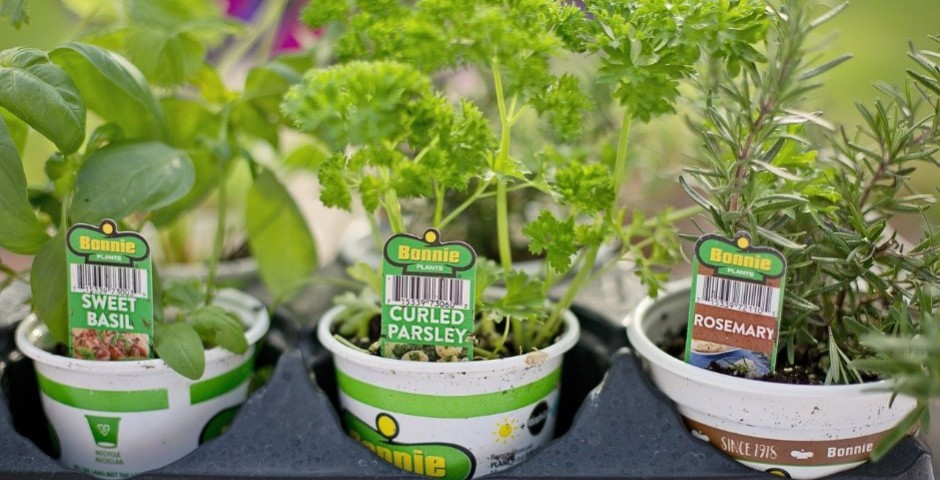 苗を植える方法