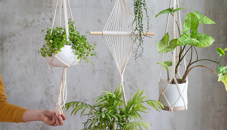 インテリアに映える観葉植物はどう選ぶ?おしゃれな飾り方も伝授します